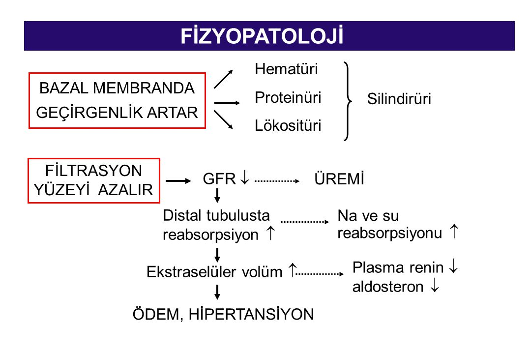 FİZYOPATOLOJİ Hematüri Proteinüri Lökositüri BAZAL MEMBRANDA