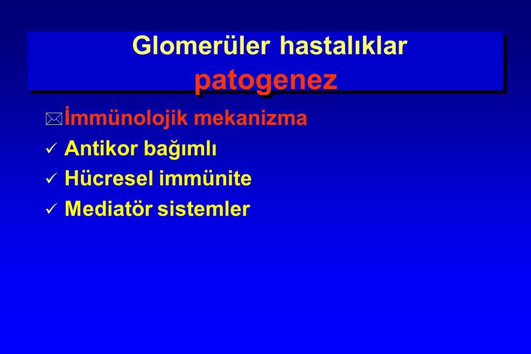 Glomerüler hastalıklar patogenez