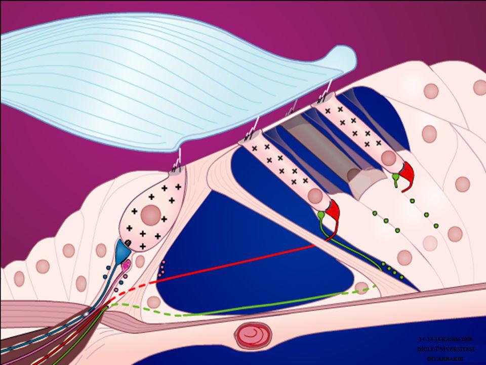 14-15-16 KASIM 2008 DİCLE ÜNİVERSİTESİ DİYARBAKIR