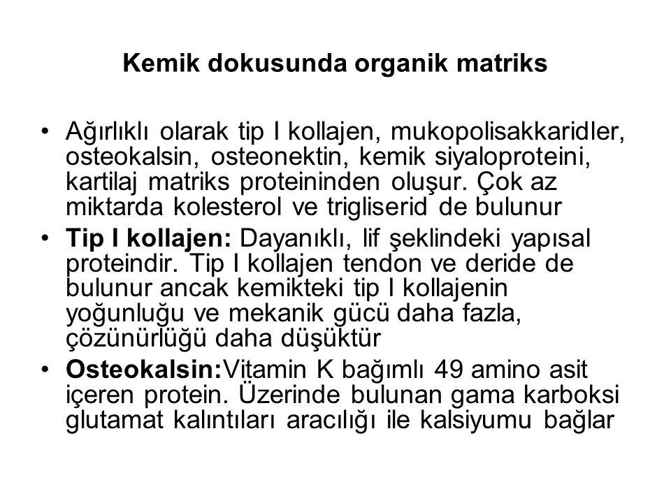 Kemik dokusunda organik matriks