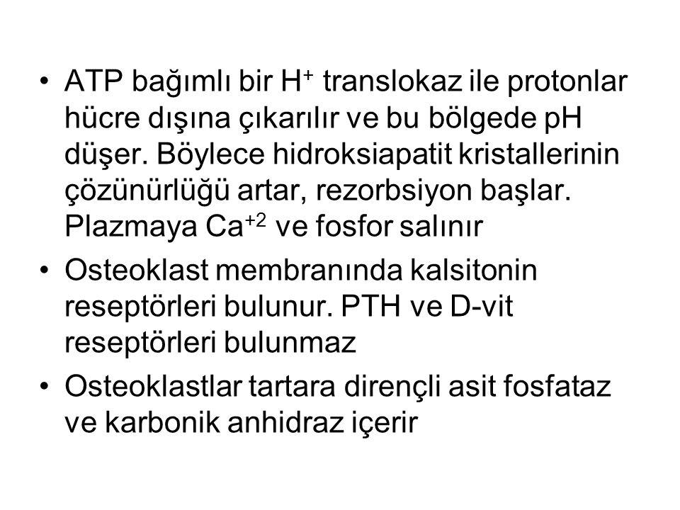 ATP bağımlı bir H+ translokaz ile protonlar hücre dışına çıkarılır ve bu bölgede pH düşer. Böylece hidroksiapatit kristallerinin çözünürlüğü artar, rezorbsiyon başlar. Plazmaya Ca+2 ve fosfor salınır
