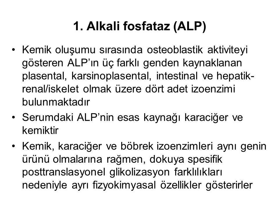 1. Alkali fosfataz (ALP)