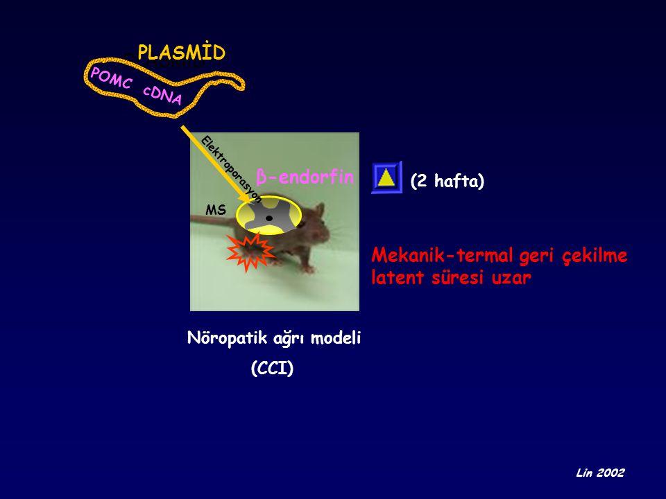 Mekanik-termal geri çekilme latent süresi uzar
