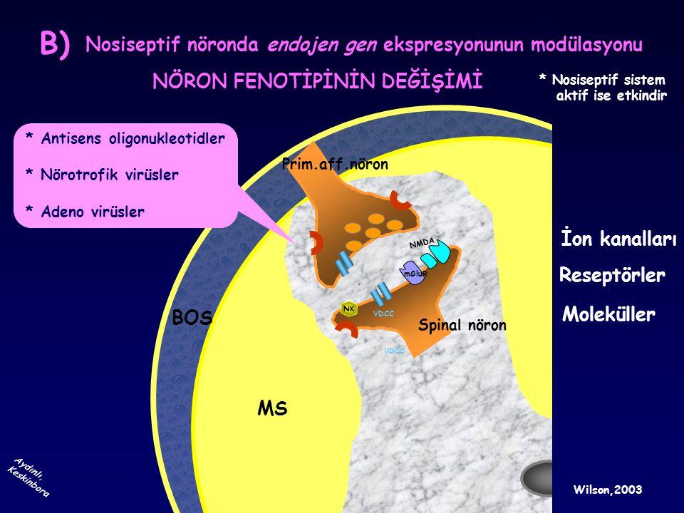 B) Nosiseptif nöronda endojen gen ekspresyonunun modülasyonu
