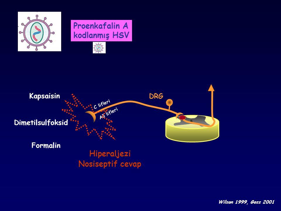 Proenkafalin A kodlanmış HSV Hiperaljezi Nosiseptif cevap Kapsaisin