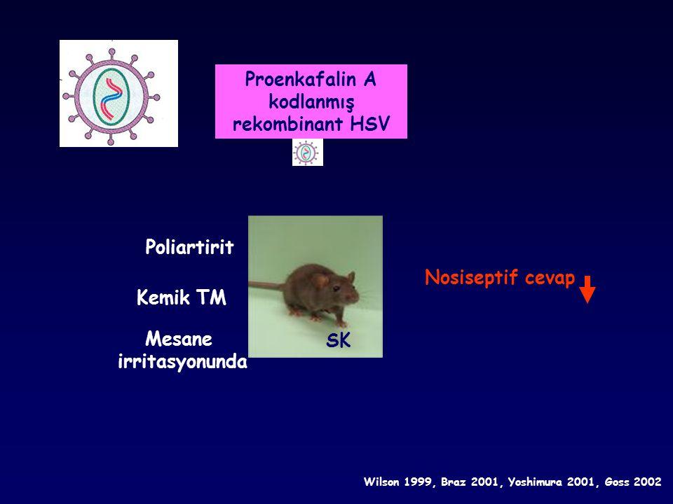 Proenkafalin A kodlanmış rekombinant HSV Mesane irritasyonunda