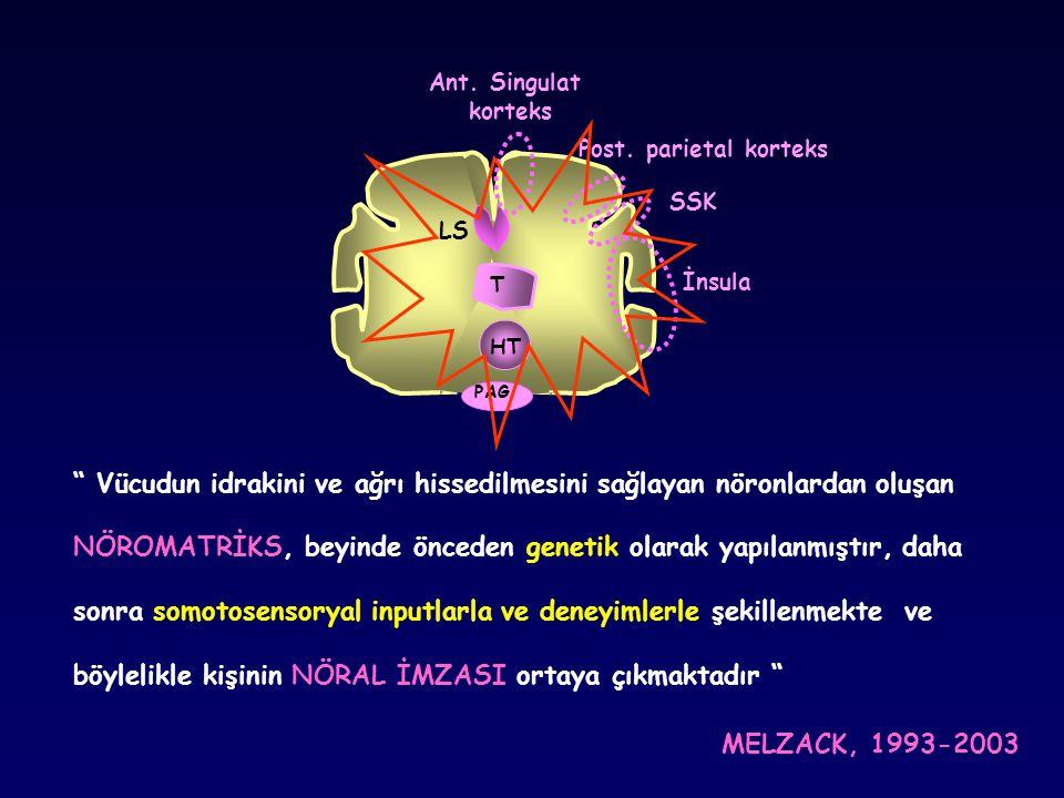 Vücudun idrakini ve ağrı hissedilmesini sağlayan nöronlardan oluşan
