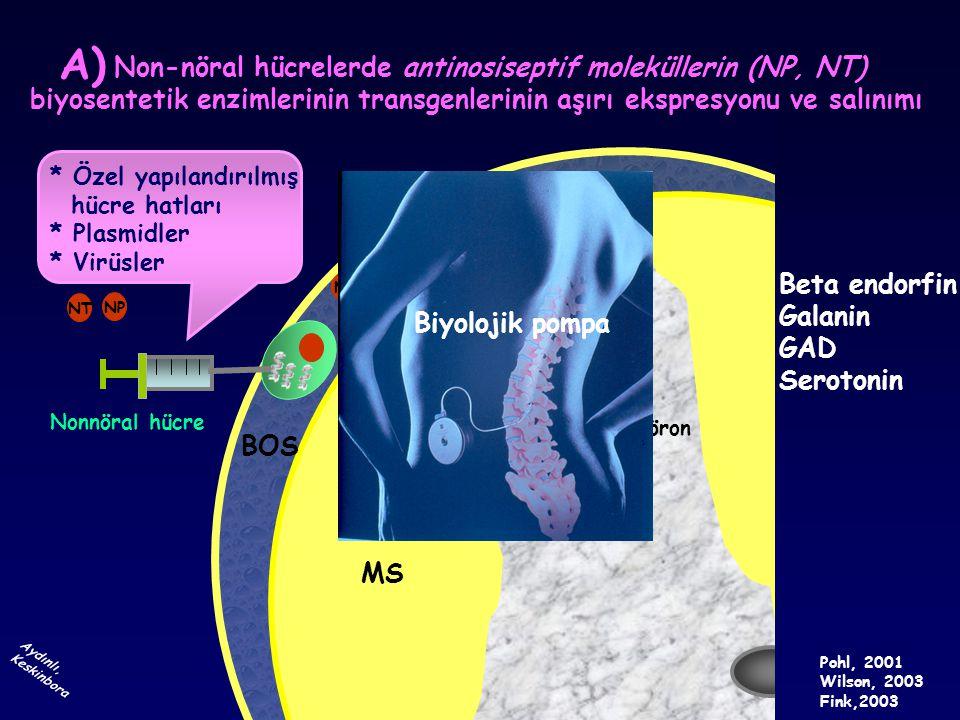 Non-nöral hücrelerde antinosiseptif moleküllerin (NP, NT)