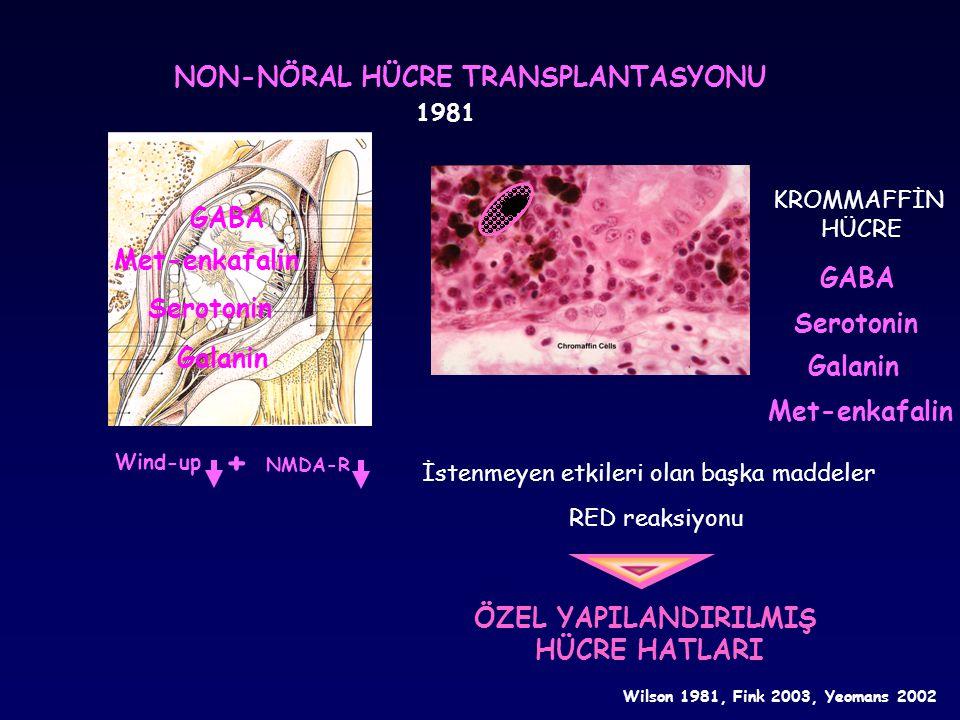 + NON-NÖRAL HÜCRE TRANSPLANTASYONU GABA Met-enkafalin GABA Serotonin