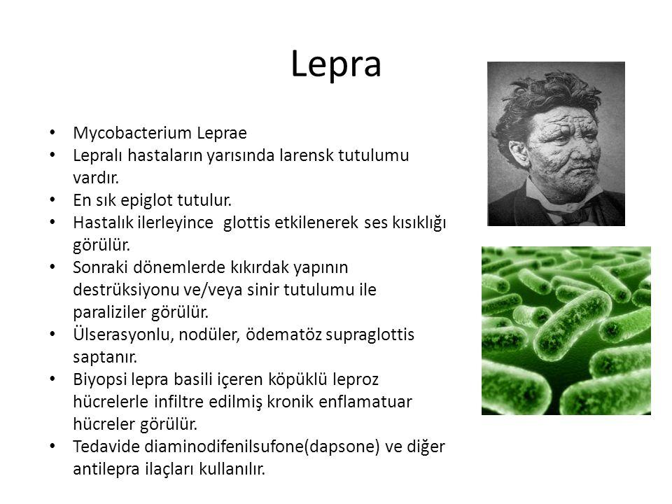 Lepra Mycobacterium Leprae