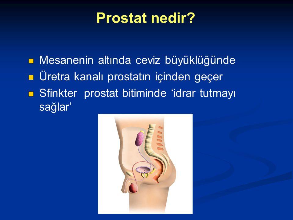 Prostat nedir Mesanenin altında ceviz büyüklüğünde