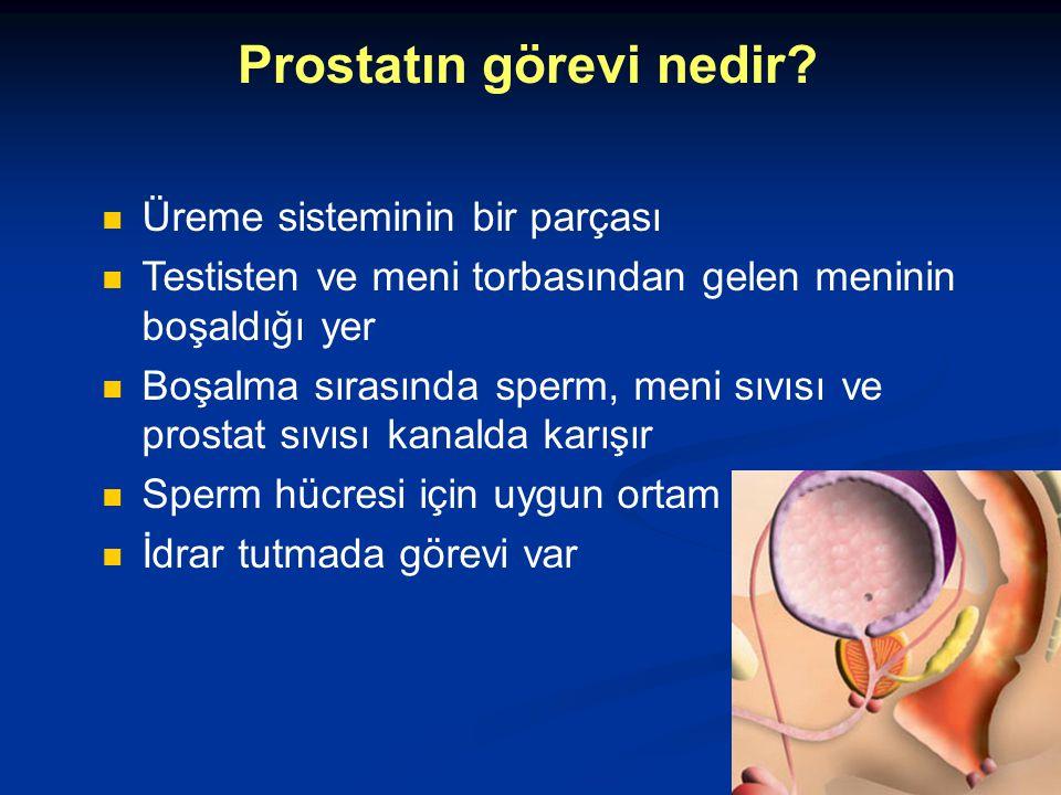 Prostatın görevi nedir