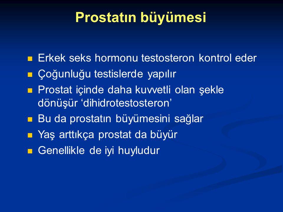Prostatın büyümesi Erkek seks hormonu testosteron kontrol eder