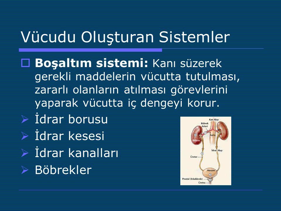 Vücudu Oluşturan Sistemler