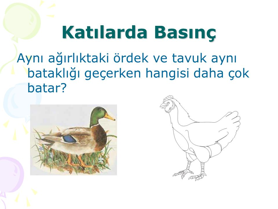 Katılarda Basınç Aynı ağırlıktaki ördek ve tavuk aynı bataklığı geçerken hangisi daha çok batar