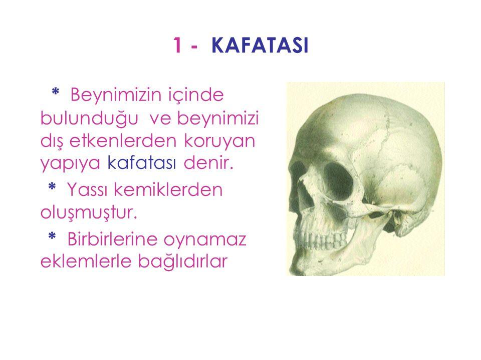 1 - KAFATASI * Beynimizin içinde bulunduğu ve beynimizi dış etkenlerden koruyan yapıya kafatası denir.