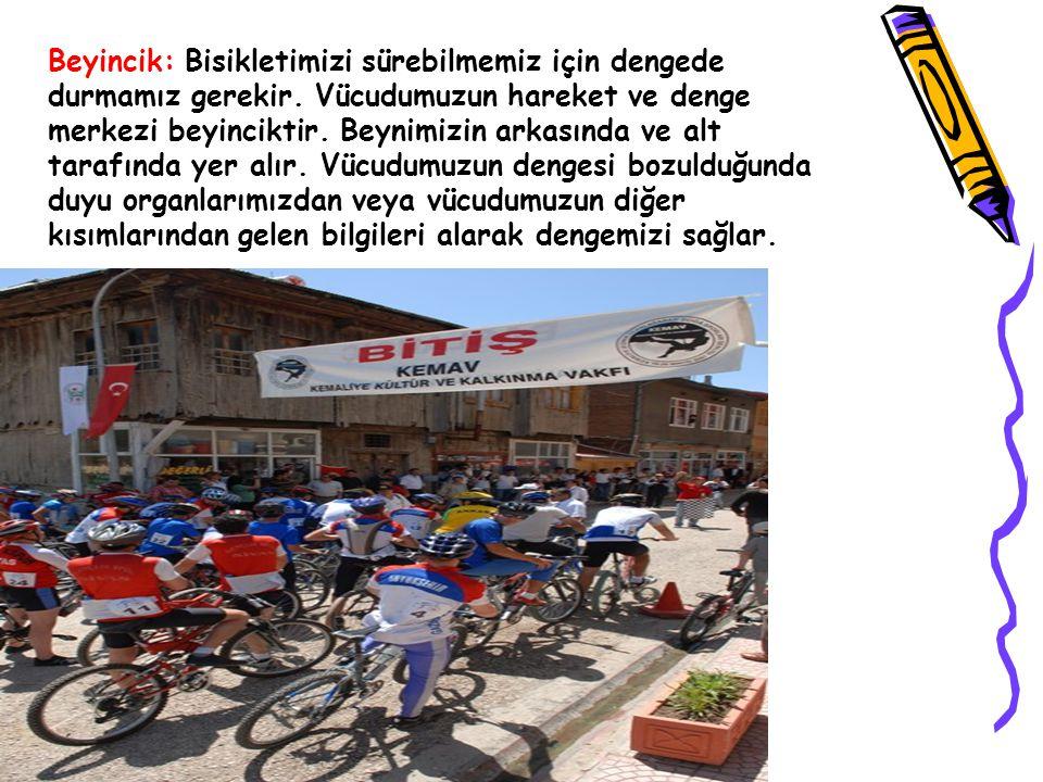 Beyincik: Bisikletimizi sürebilmemiz için dengede durmamız gerekir