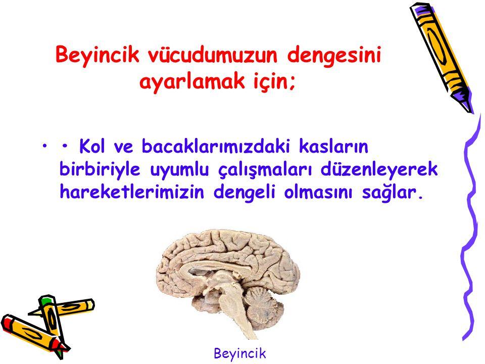 Beyincik vücudumuzun dengesini ayarlamak için;