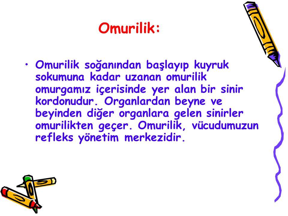 Omurilik: