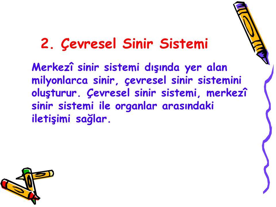 2. Çevresel Sinir Sistemi