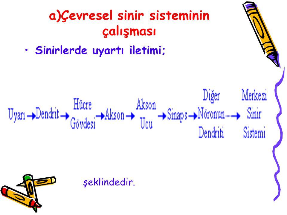 a)Çevresel sinir sisteminin çalışması