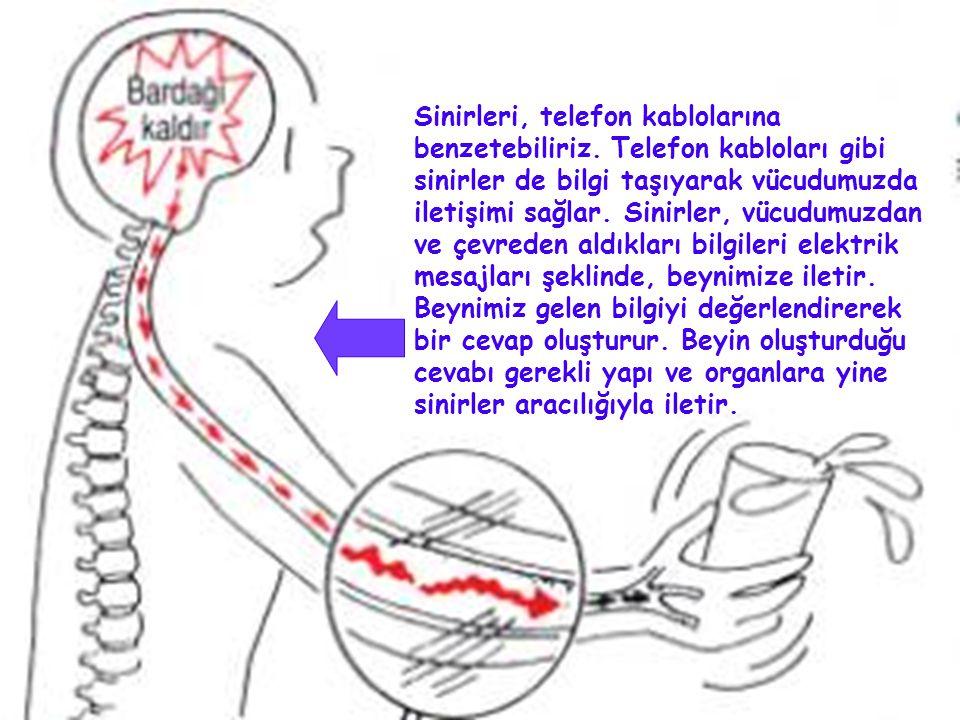 Sinirleri, telefon kablolarına benzetebiliriz