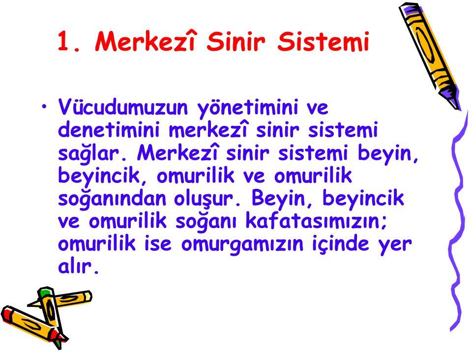 1. Merkezî Sinir Sistemi