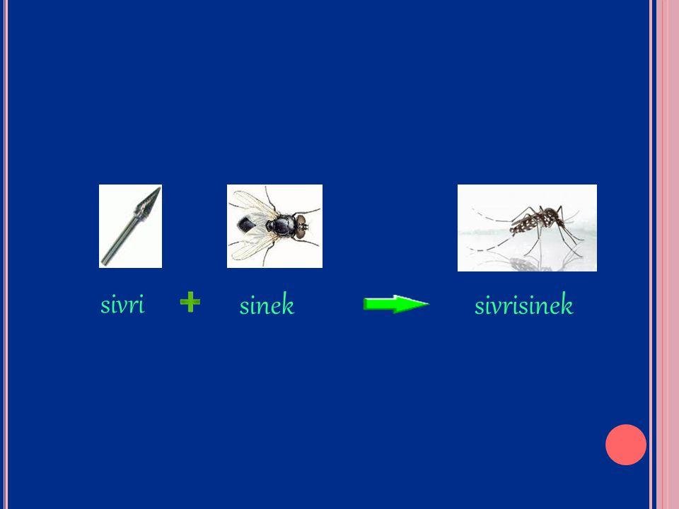 sivri sinek sivrisinek