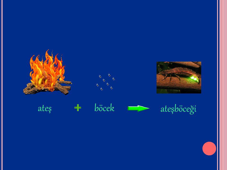 ateş böcek ateşböceği