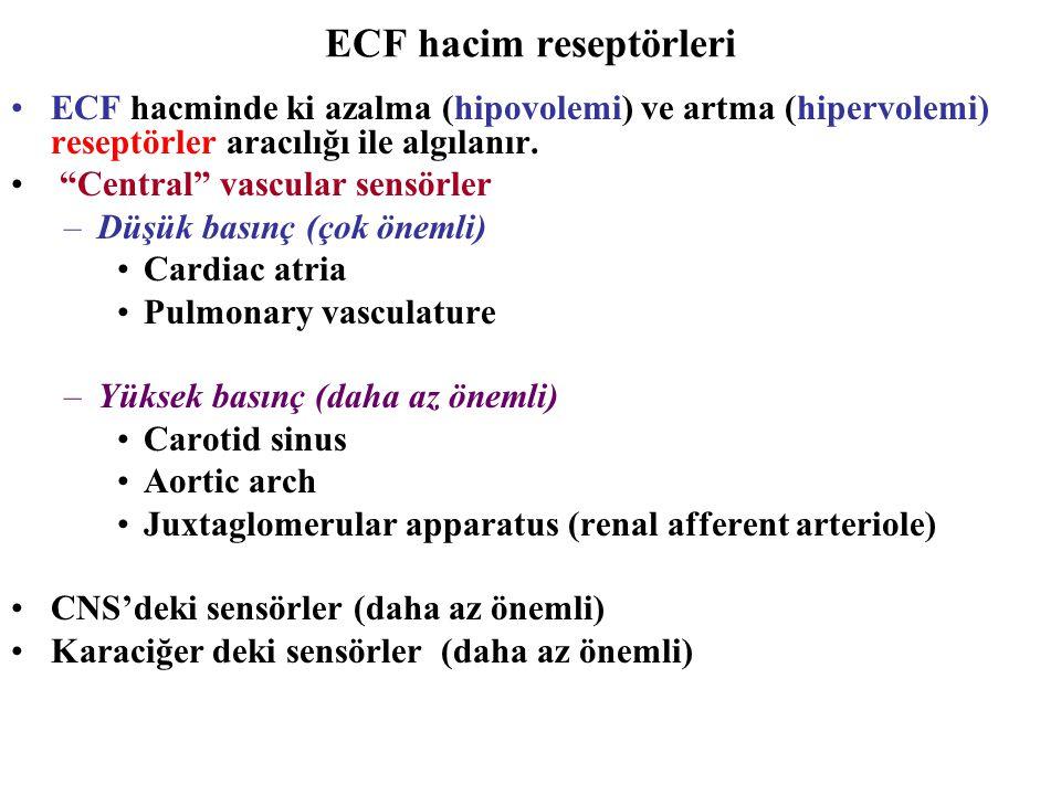 ECF hacim reseptörleri