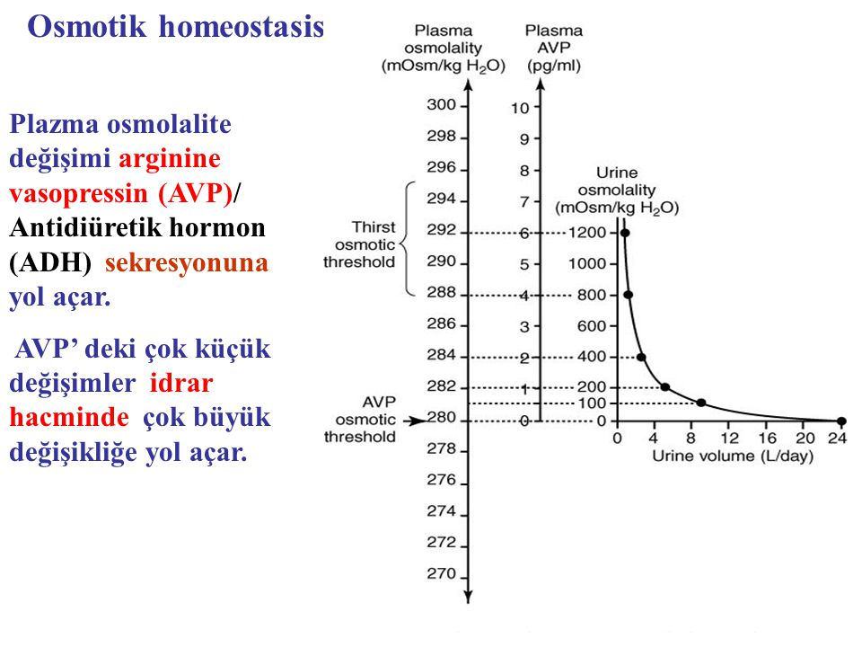 Osmotik homeostasis Plazma osmolalite değişimi arginine vasopressin (AVP)/ Antidiüretik hormon (ADH) sekresyonuna yol açar.