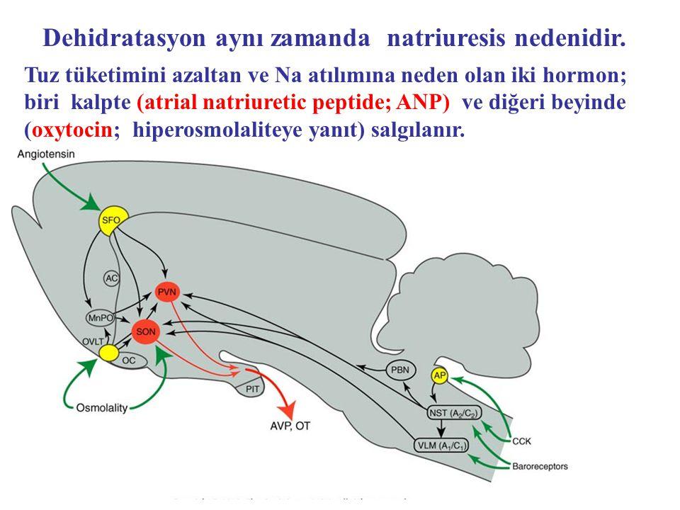 Dehidratasyon aynı zamanda natriuresis nedenidir.