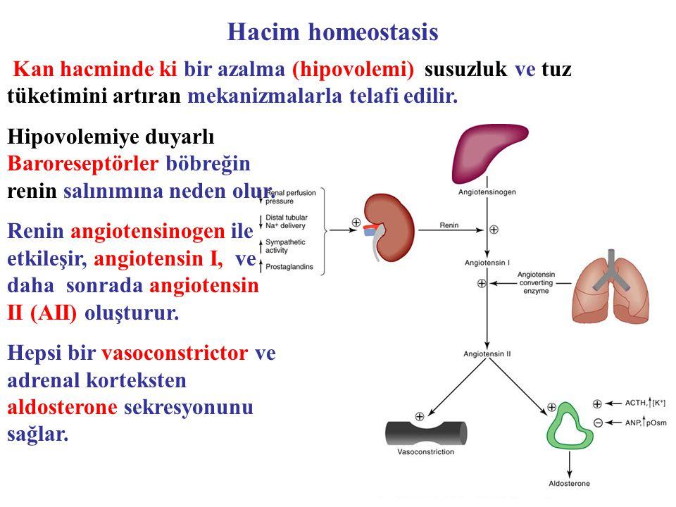 Hacim homeostasis Kan hacminde ki bir azalma (hipovolemi) susuzluk ve tuz tüketimini artıran mekanizmalarla telafi edilir.