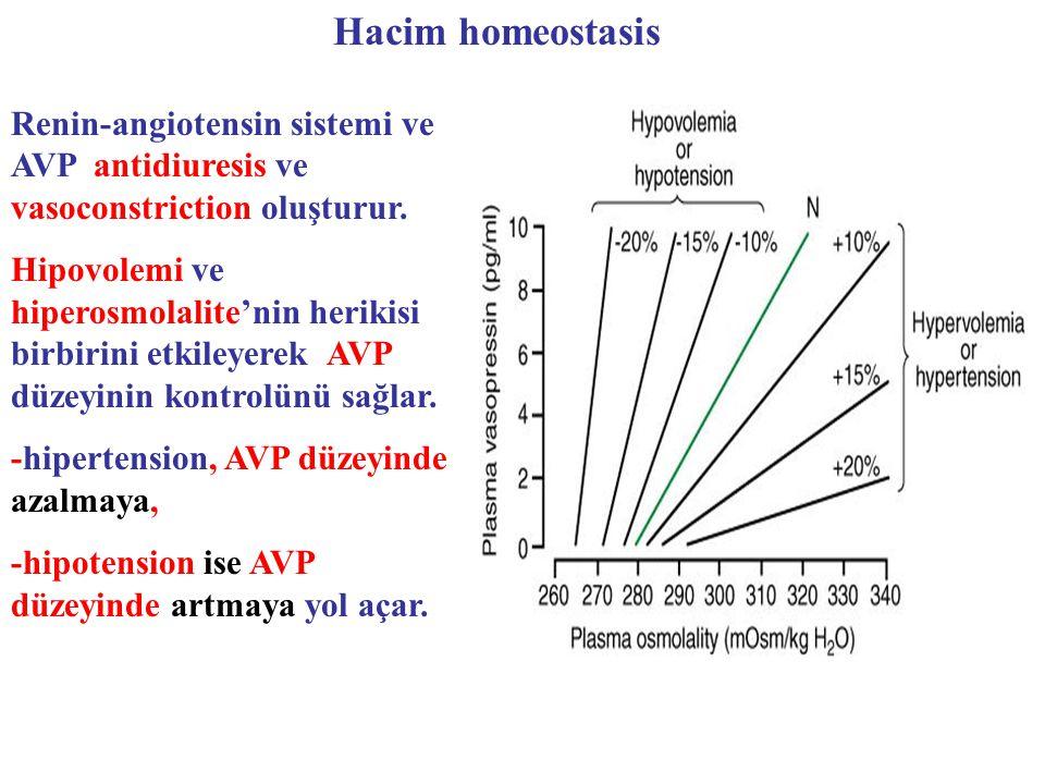 Hacim homeostasis Renin-angiotensin sistemi ve AVP antidiuresis ve vasoconstriction oluşturur.