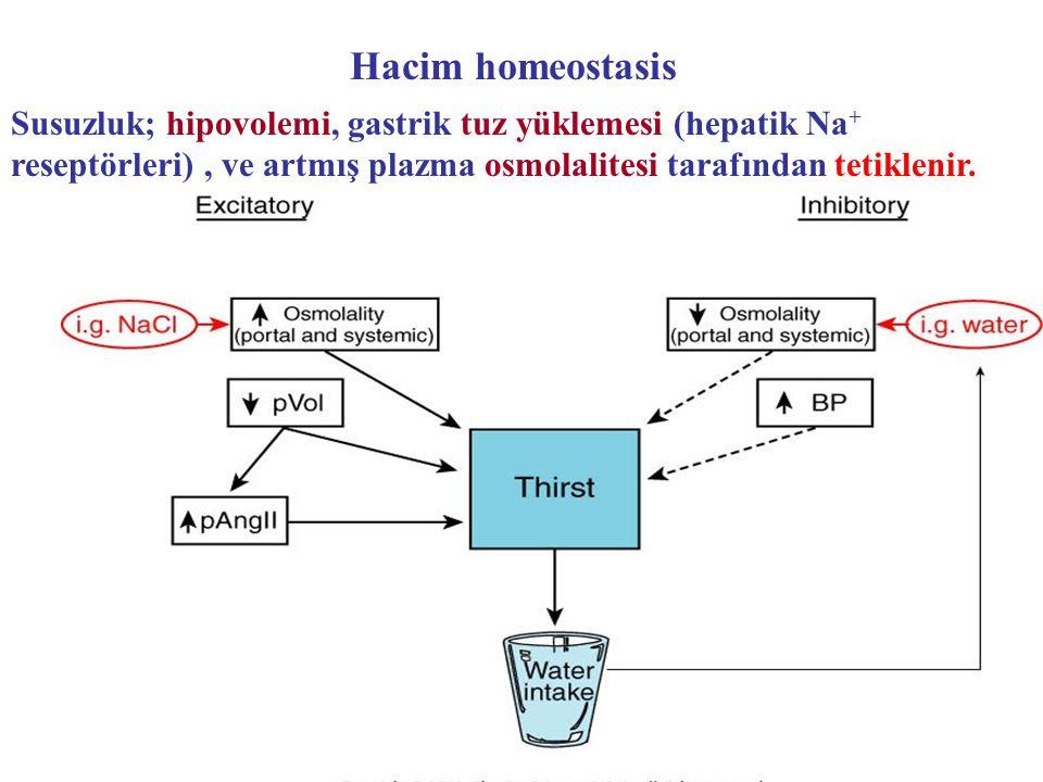 Hacim homeostasis Susuzluk; hipovolemi, gastrik tuz yüklemesi (hepatik Na+ reseptörleri) , ve artmış plazma osmolalitesi tarafından tetiklenir.