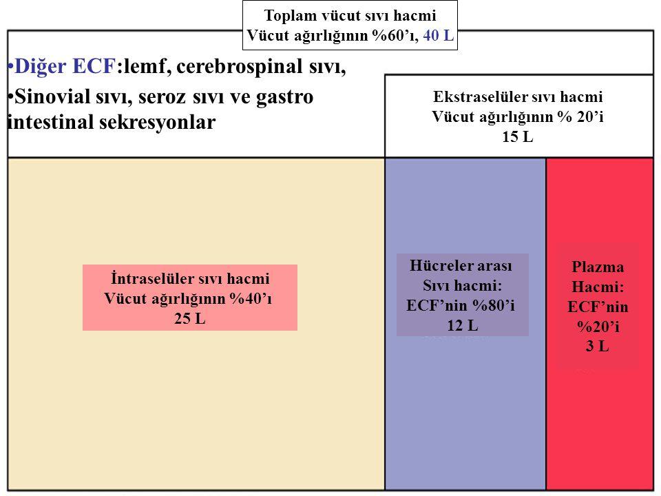 Diğer ECF:lemf, cerebrospinal sıvı,