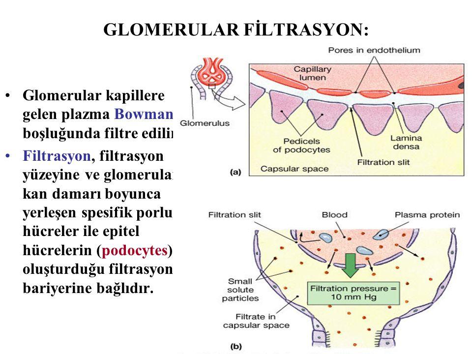 GLOMERULAR FİLTRASYON: