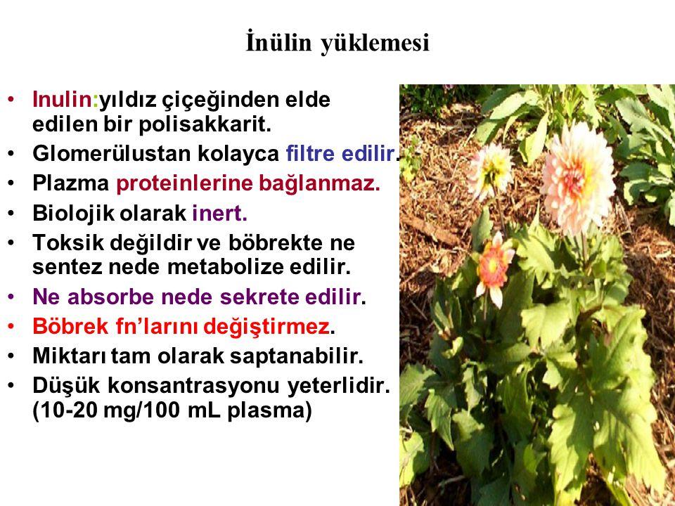 İnülin yüklemesi Inulin:yıldız çiçeğinden elde edilen bir polisakkarit. Glomerülustan kolayca filtre edilir.