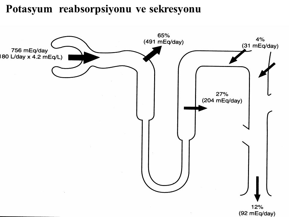 Potasyum reabsorpsiyonu ve sekresyonu