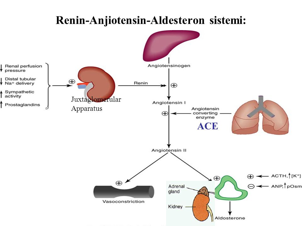 Renin-Anjiotensin-Aldesteron sistemi: