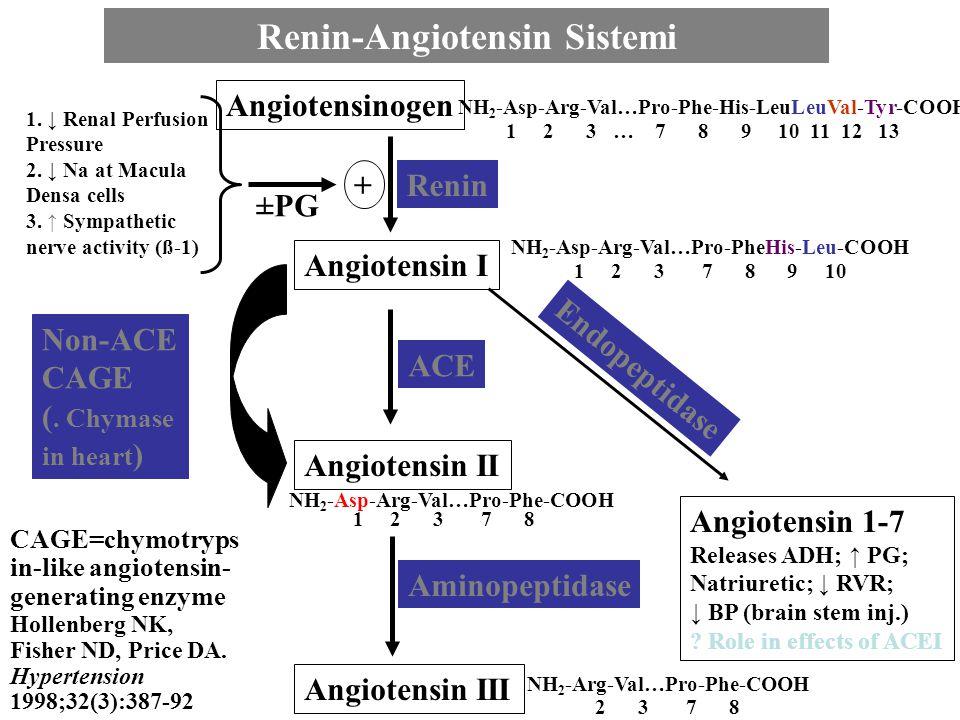 Renin-Angiotensin Sistemi