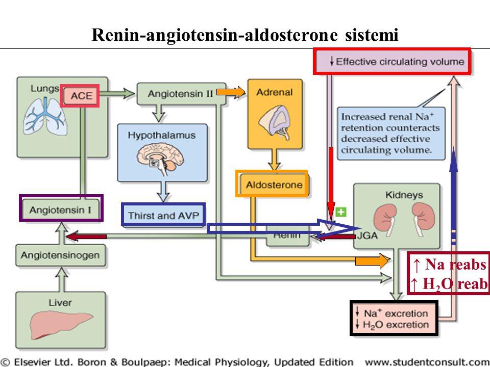 Renin-angiotensin-aldosterone sistemi