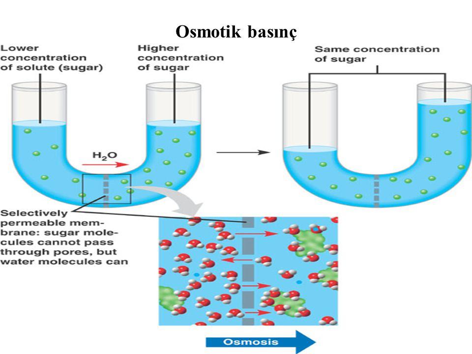 Osmotik basınç