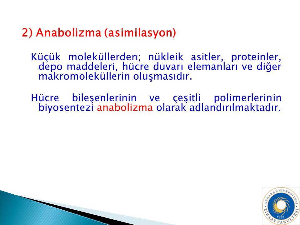 2) Anabolizma (asimilasyon)