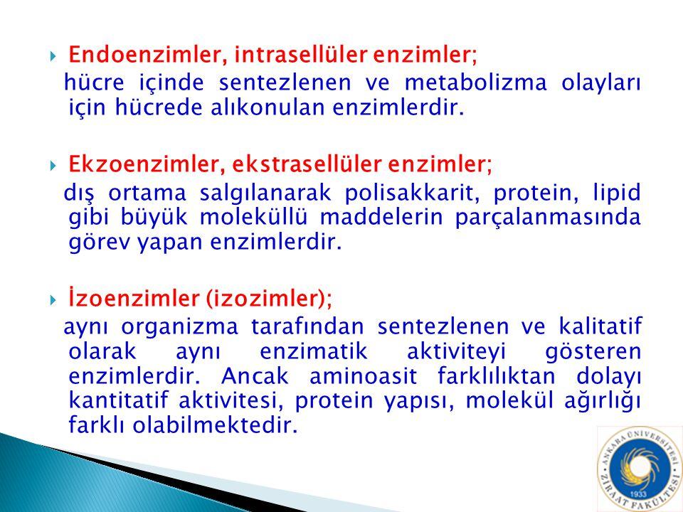 Endoenzimler, intrasellüler enzimler;