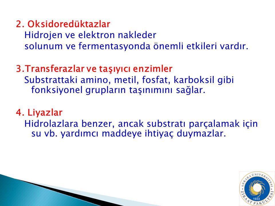 2. Oksidoredüktazlar Hidrojen ve elektron nakleder. solunum ve fermentasyonda önemli etkileri vardır.