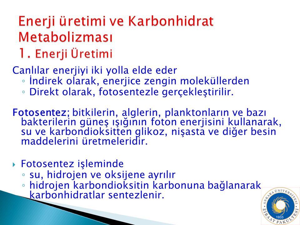 Enerji üretimi ve Karbonhidrat Metabolizması 1. Enerji Üretimi