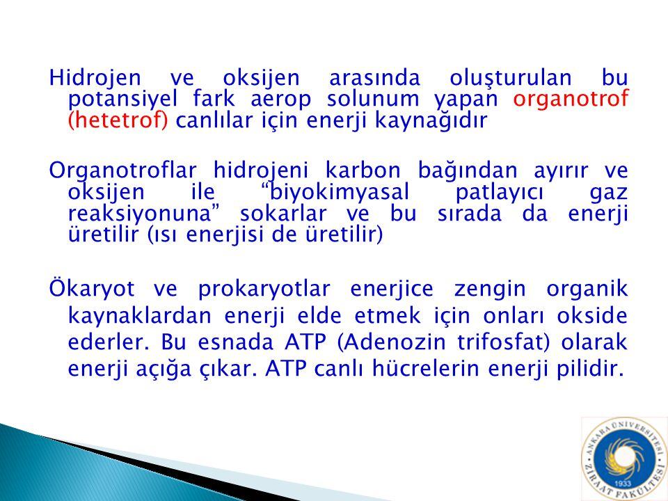 Hidrojen ve oksijen arasında oluşturulan bu potansiyel fark aerop solunum yapan organotrof (hetetrof) canlılar için enerji kaynağıdır