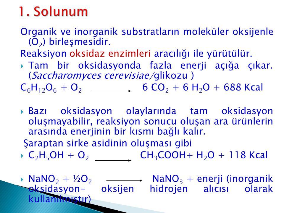1. Solunum Organik ve inorganik substratların moleküler oksijenle (O2) birleşmesidir. Reaksiyon oksidaz enzimleri aracılığı ile yürütülür.
