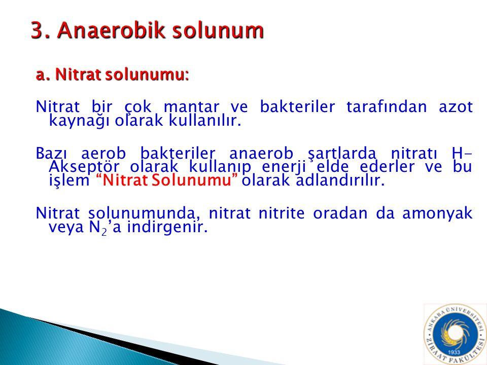 3. Anaerobik solunum a. Nitrat solunumu: